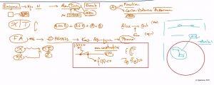 52532 - VI – e-Masterclass: Το πνεύμα των Χαμαιλεόντων III. (Dessin)