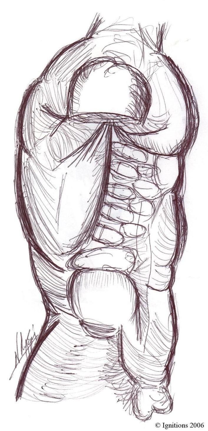 Etude de torse et muscles d'après Leonardo da Vinci
