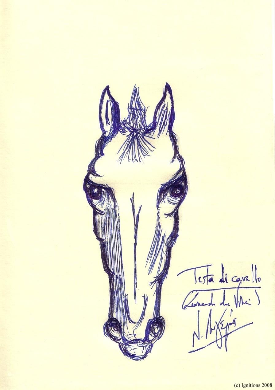 Testa di cavallo. (Leonardo da Vinci)