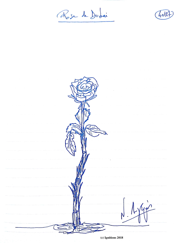 Rose de Dubai. (Dessin)