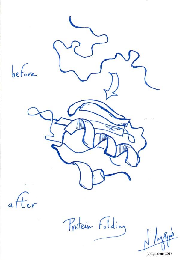 Protein Folding. (Dessin)