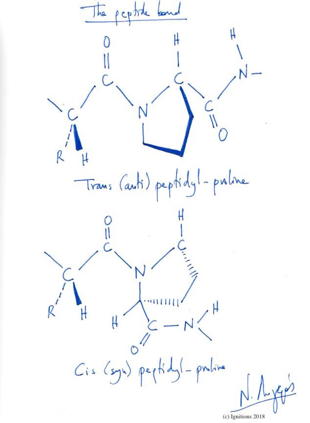 The peptide bond. (Dessin)