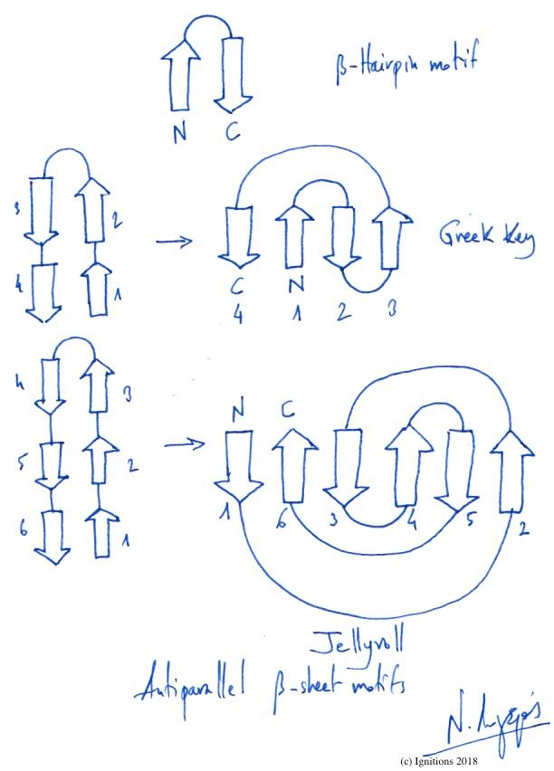 Antiparallel β-sheet motifs. (Dessin)