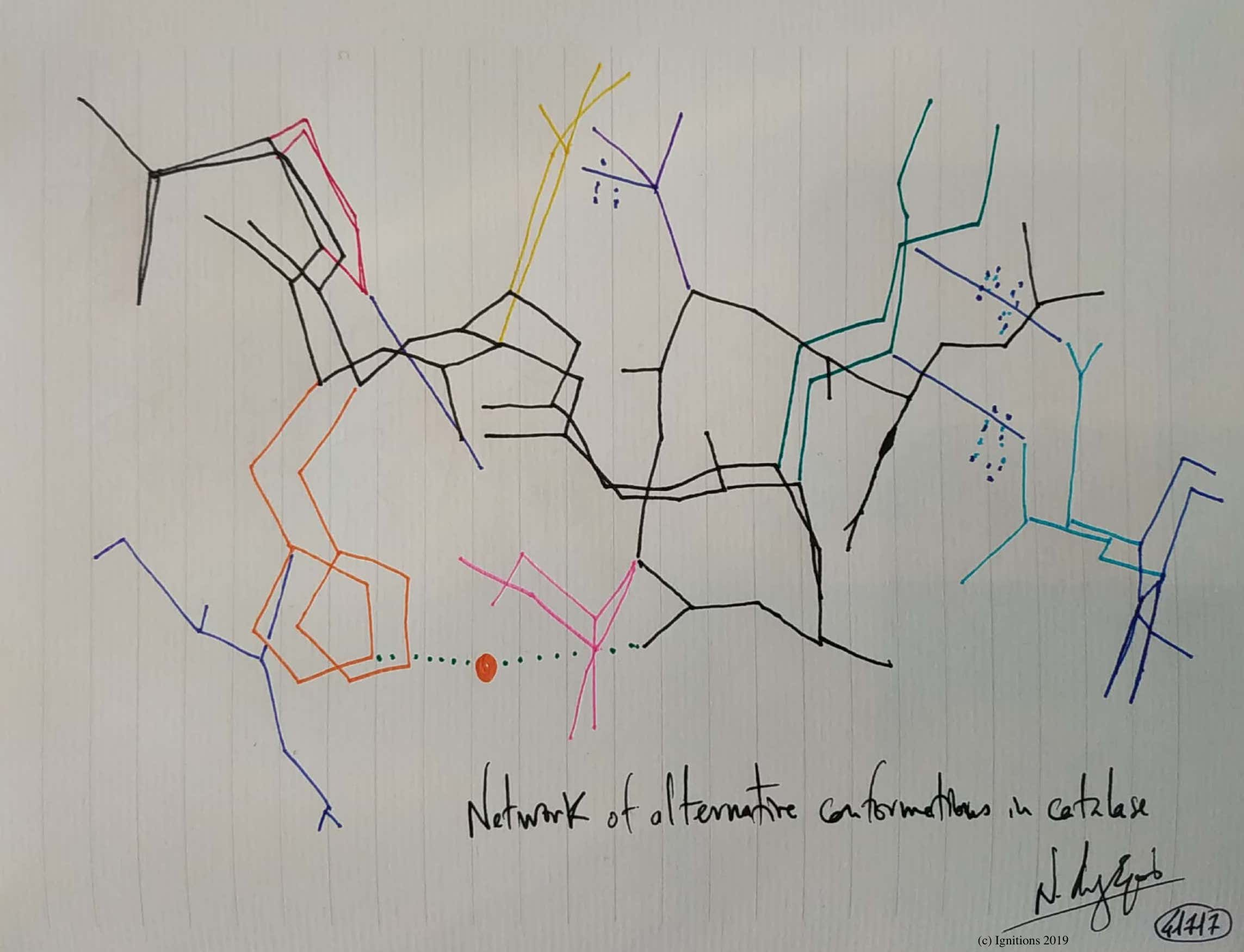 Network of alternative conformations in catalase. (Dessin)