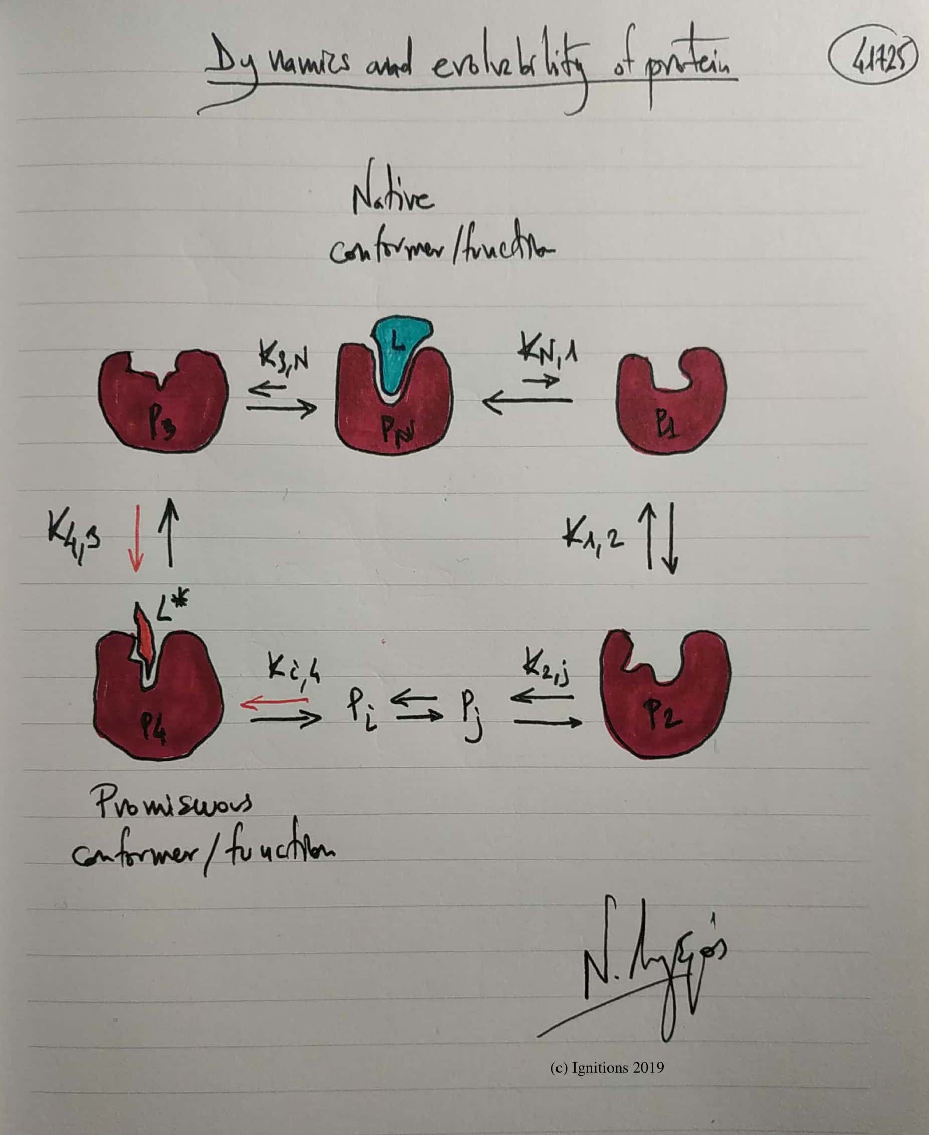 Dynamics and evolvability of protein. (Dessin)