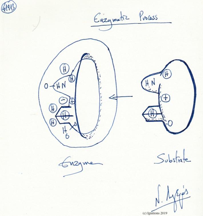 Enzymatic Process. (Dessin)