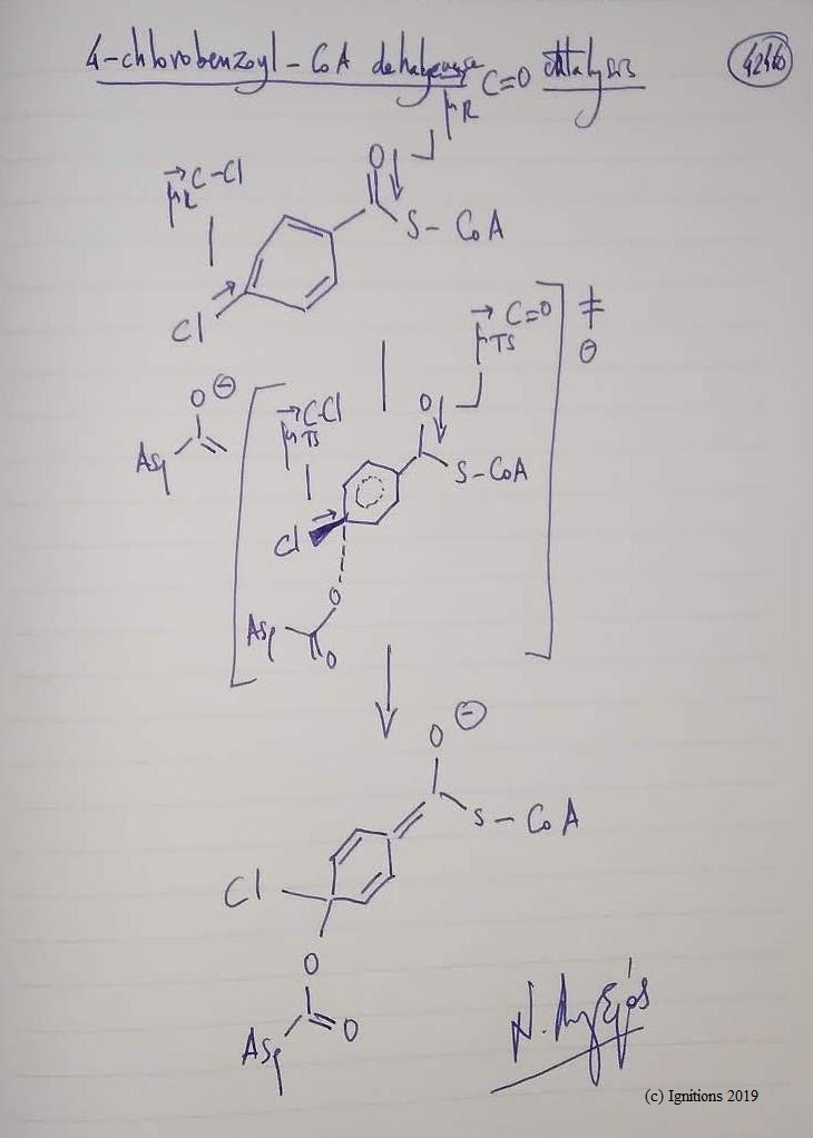 4-chlorobenzoyl-CoA dehalogenase catalysis. (Dessin)