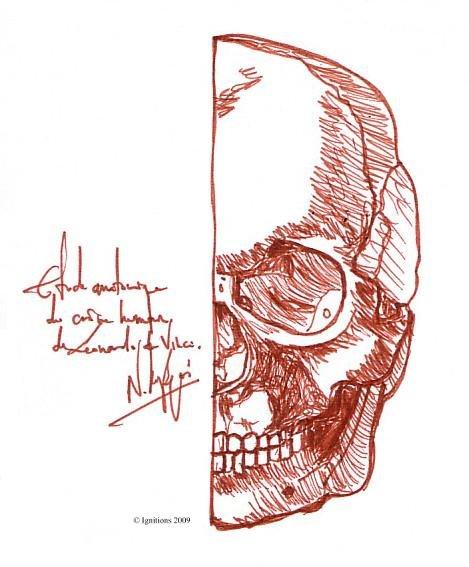 Etude anatomique de crâne humain de Leonardo da Vinci.