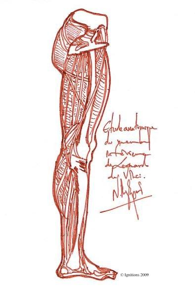 Etude anatomique du membre inférieur de Leonardo da Vinci.