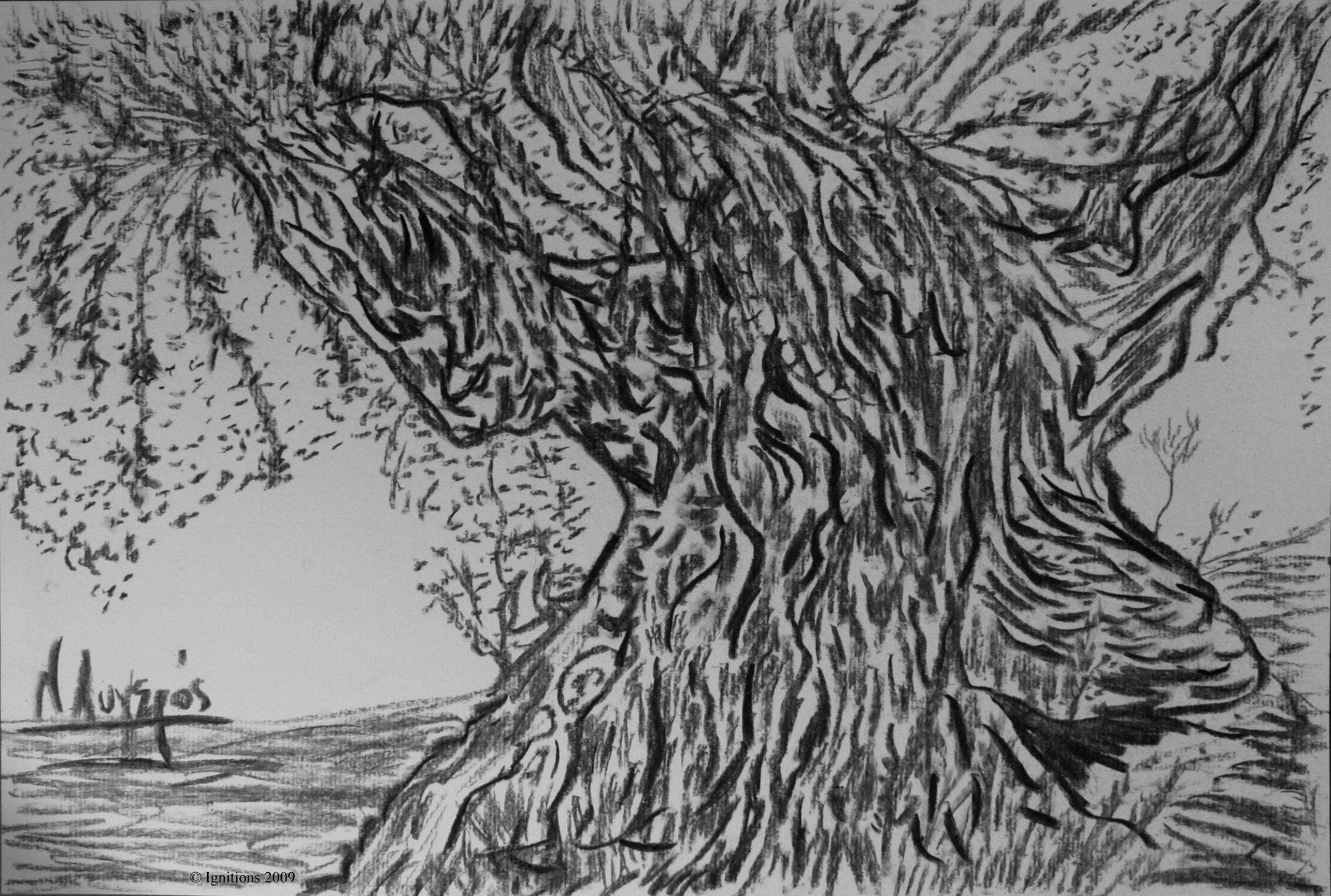 Tronc noueux d'olivier de Provence.