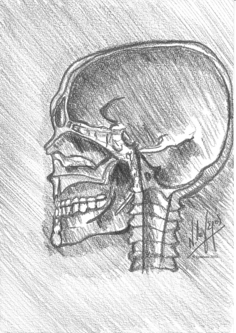 Etude anatomique de Leonardo da Vinci de crâne en vue latérale.