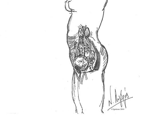 Dessin anatomique de l'appareil génital de la femme d'après Leonardo da Vinci.
