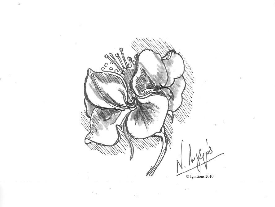 Etude de fleur herbacée de Leonardo da Vinci.