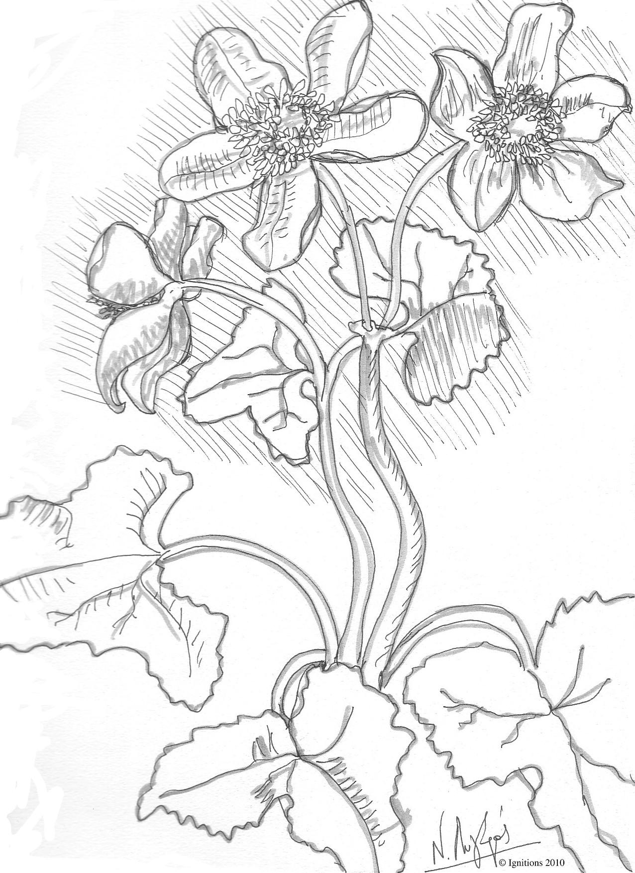 Etude II de violettes de Leonardo da Vinci.