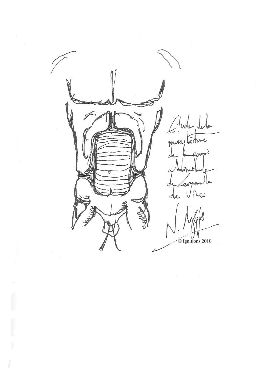 Etude de la musculature de la paroi abdominale de Leonardo da Vinci.