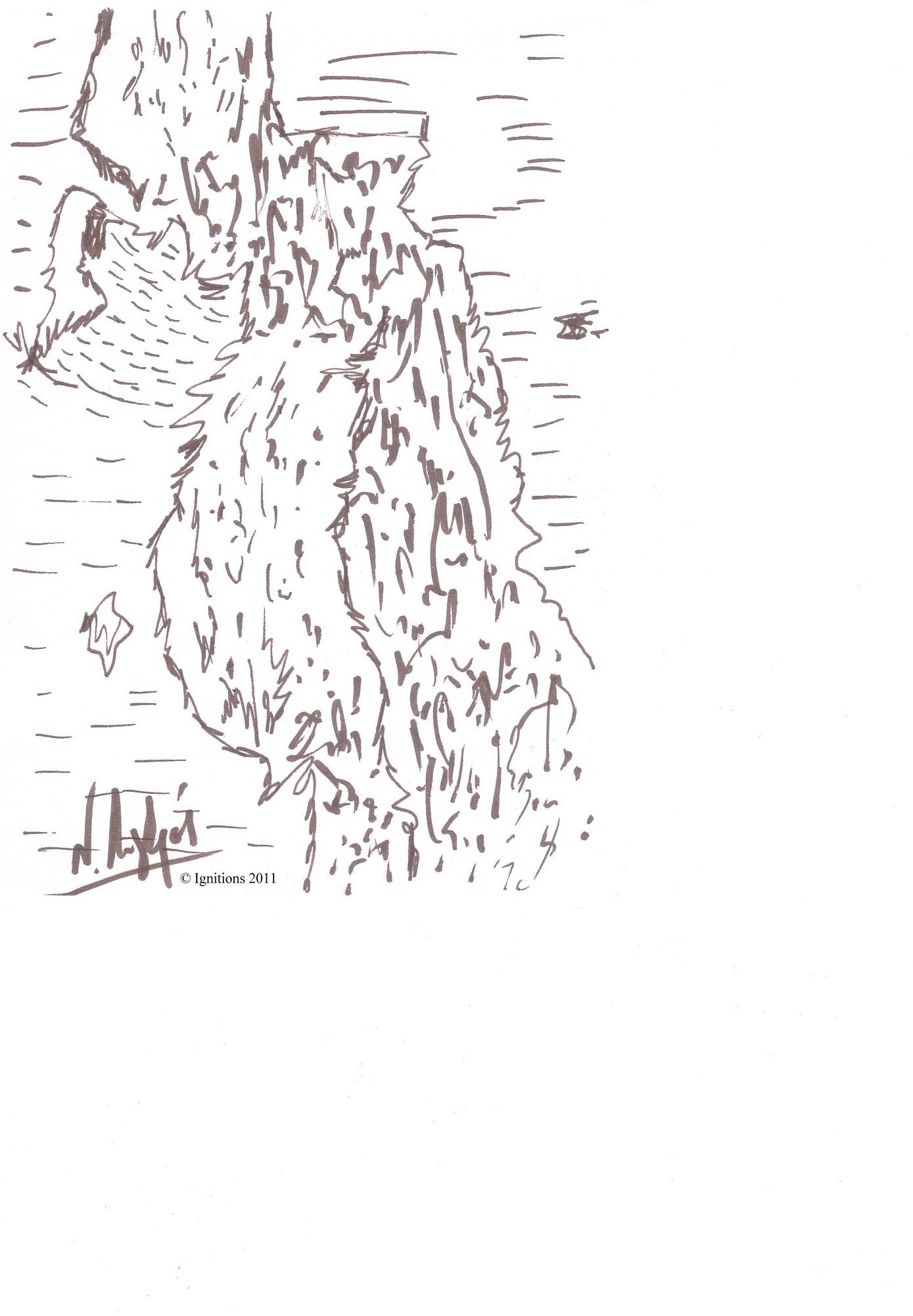 Betula pendula.
